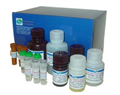 ATP酶GTP酶测试盒 QuantiChrom™ ATPase/GTPase Assay Kit